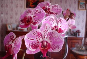 Sélection des 3 meilleures plantes d'intérieur