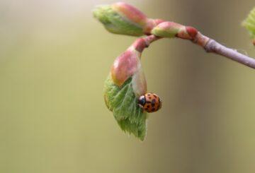 La Gemmothérapie, l'art de transformer les bourgeons en bienfaits